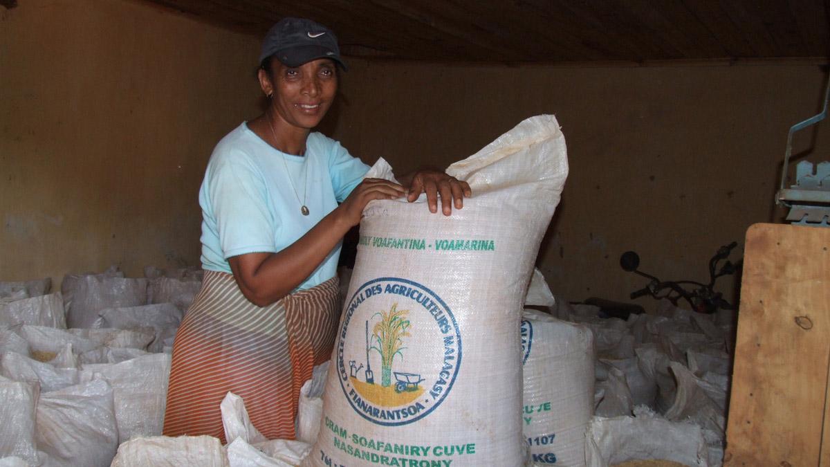 MADAGASCAR-SOA-Cram-Angéline-semences
