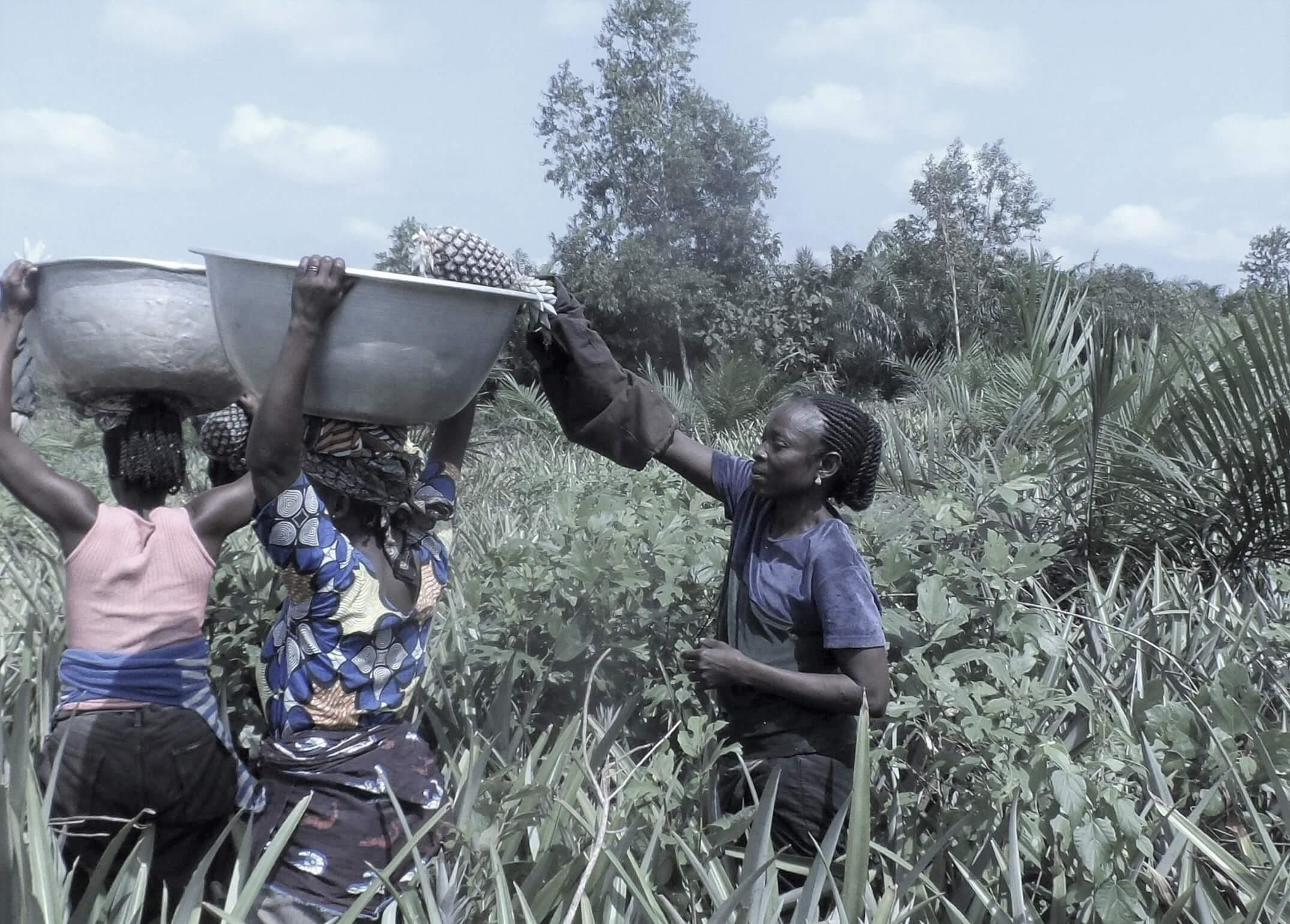 Repab ananas bio Benin