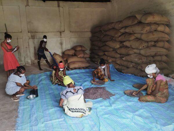 Madagascar, Triage de fèves cacao dans magazin UCLS